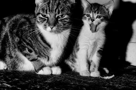 Kiria and unnamed kitten