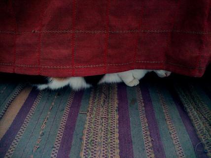 Bella hide and seek