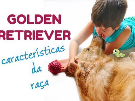 Golden Retriever: características da raça e experiência (vídeo)