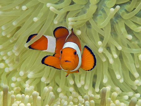 Procurando Theo…ooops…Nemo!
