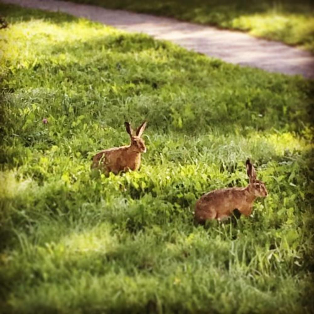 Meus vizinhos, que vejo todos os dias ao passear com a Lola
