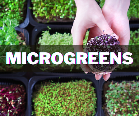 microgreens (2).png