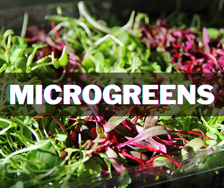 microgreens (3).png