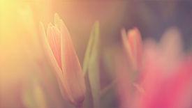 Flower%20in%20Sunlight_edited.jpg