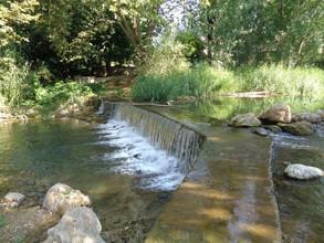 Las especies de agua dulce están disminuyendo a un ritmo alarmante