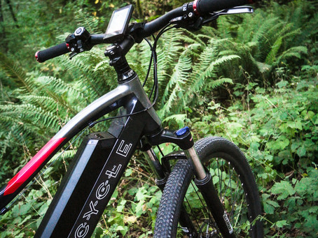 the E-XC = Power in the Forest