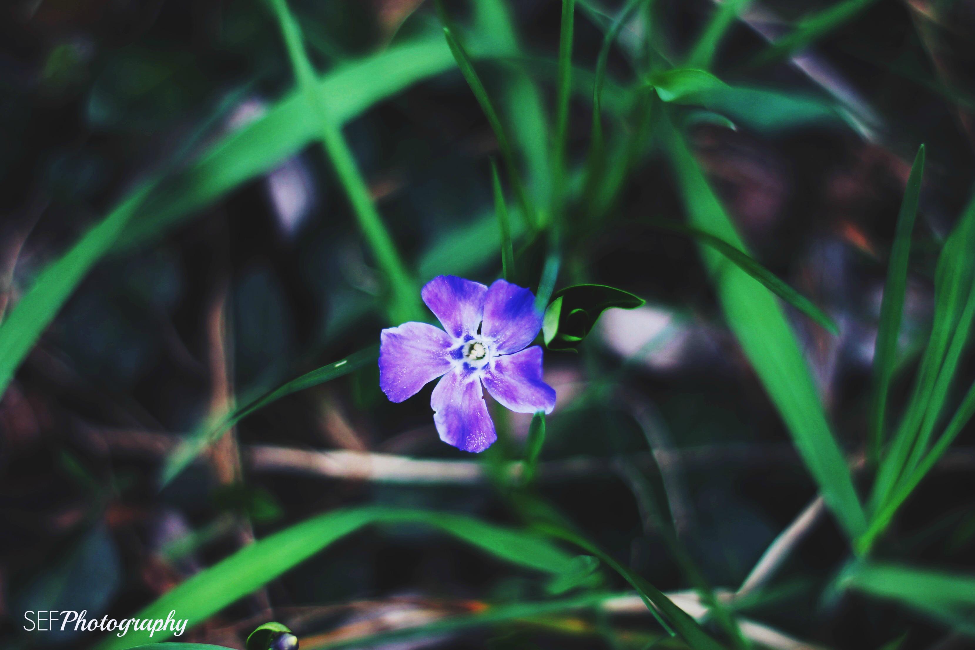 Spring flowers, Enterprise ON