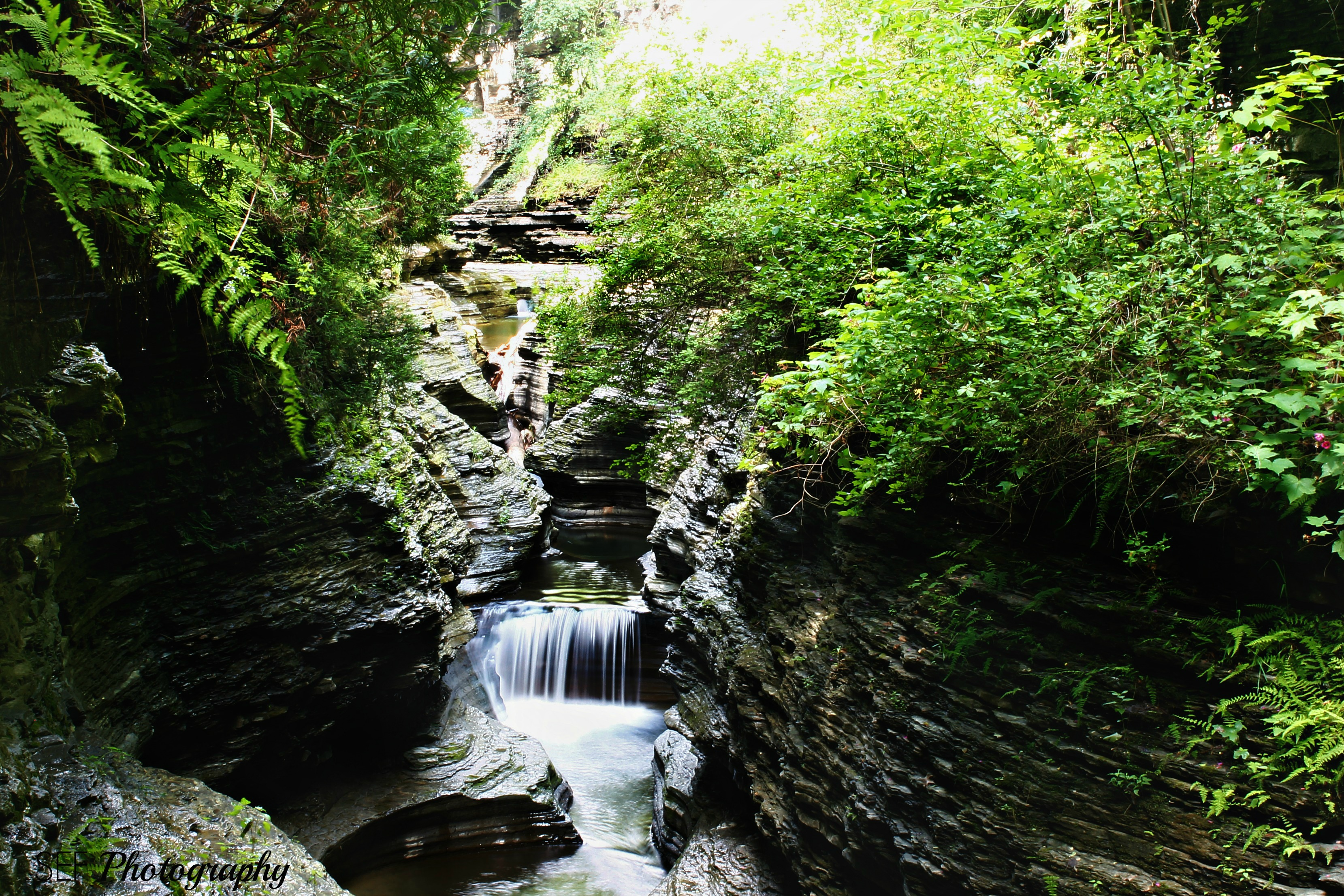 Watkins Glen, NY State