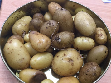 Our Homegrown Potatoes!