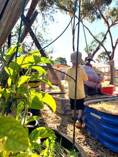 The Bushtucker Garden