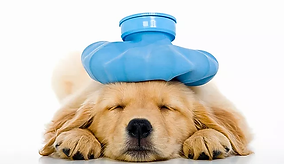 Canine Pain Management