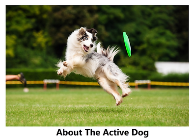 What to know about the active dog
