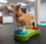 Go Dog Go Canine Home Exercises