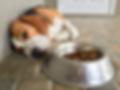 Dog loss of apetite-painful