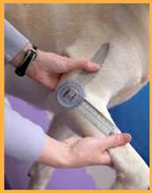 Measuring pet range of motion