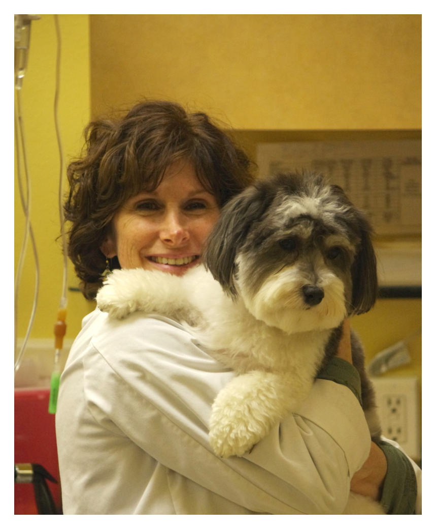 Canine Rehab Therapy
