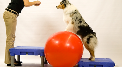 at home pet rehab exercises
