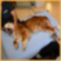dog getting NMES treatment
