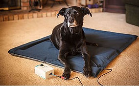 dog - Pemf bed therapy