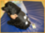 dog getting TENS rehab treatment
