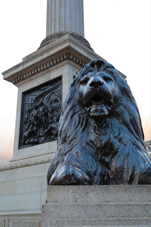 Nelson's Columns Lions, Trafalgar Square