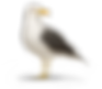 kisspng-great-black-backed-gull-european