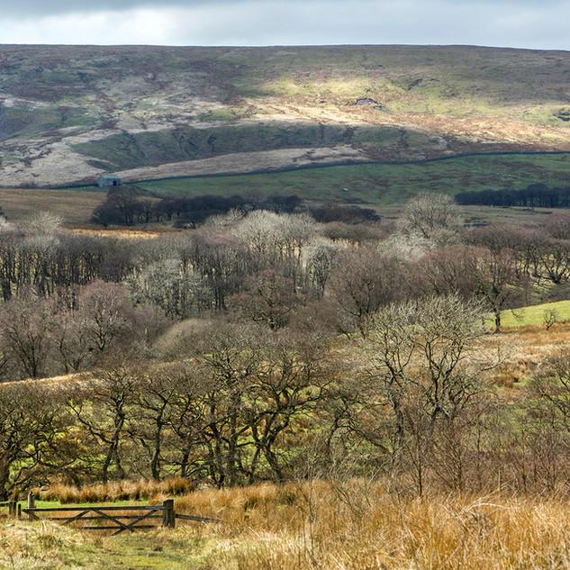 Lamb Hill fell