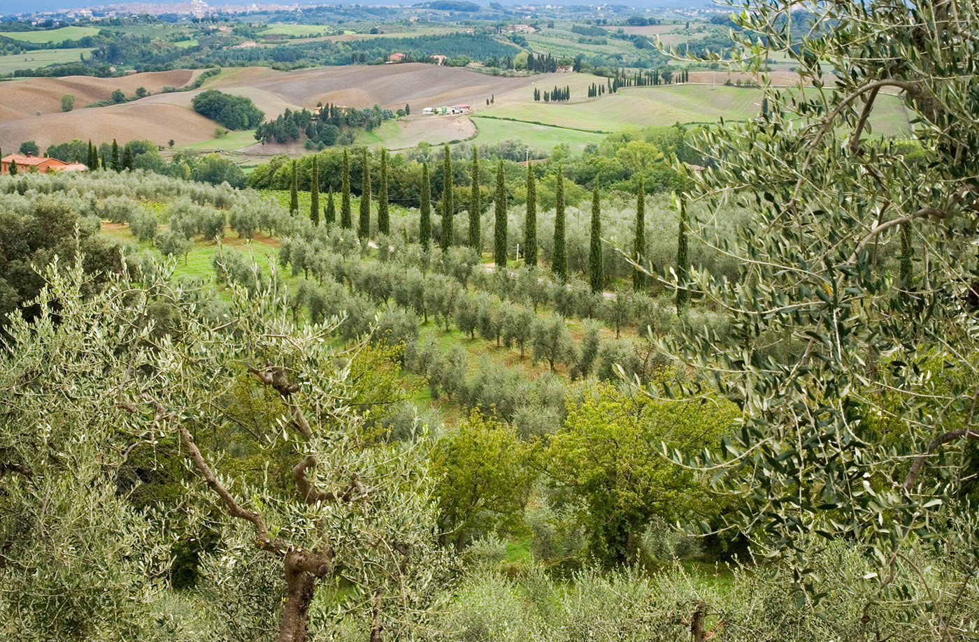 Tuscany landscape with cypress trees Cupressus sempervirens 'Pyramidalis'