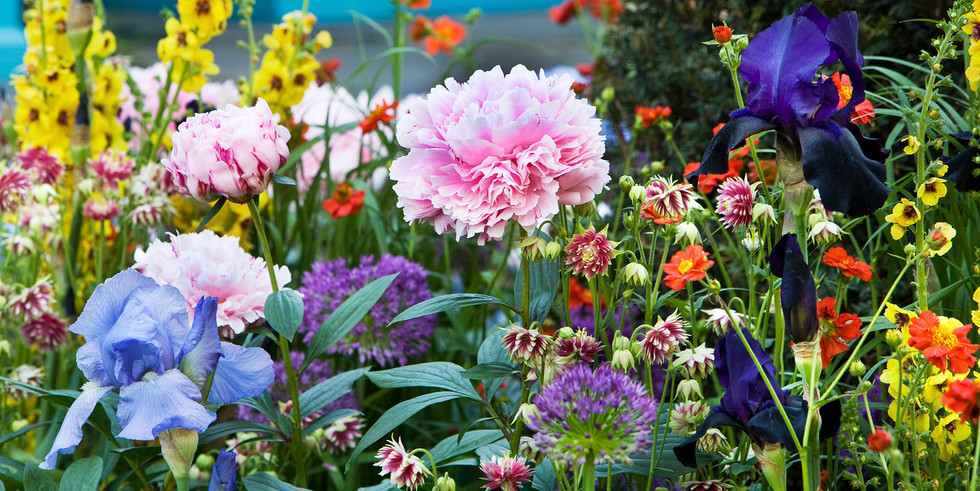 Peony and mixed country garden flowers