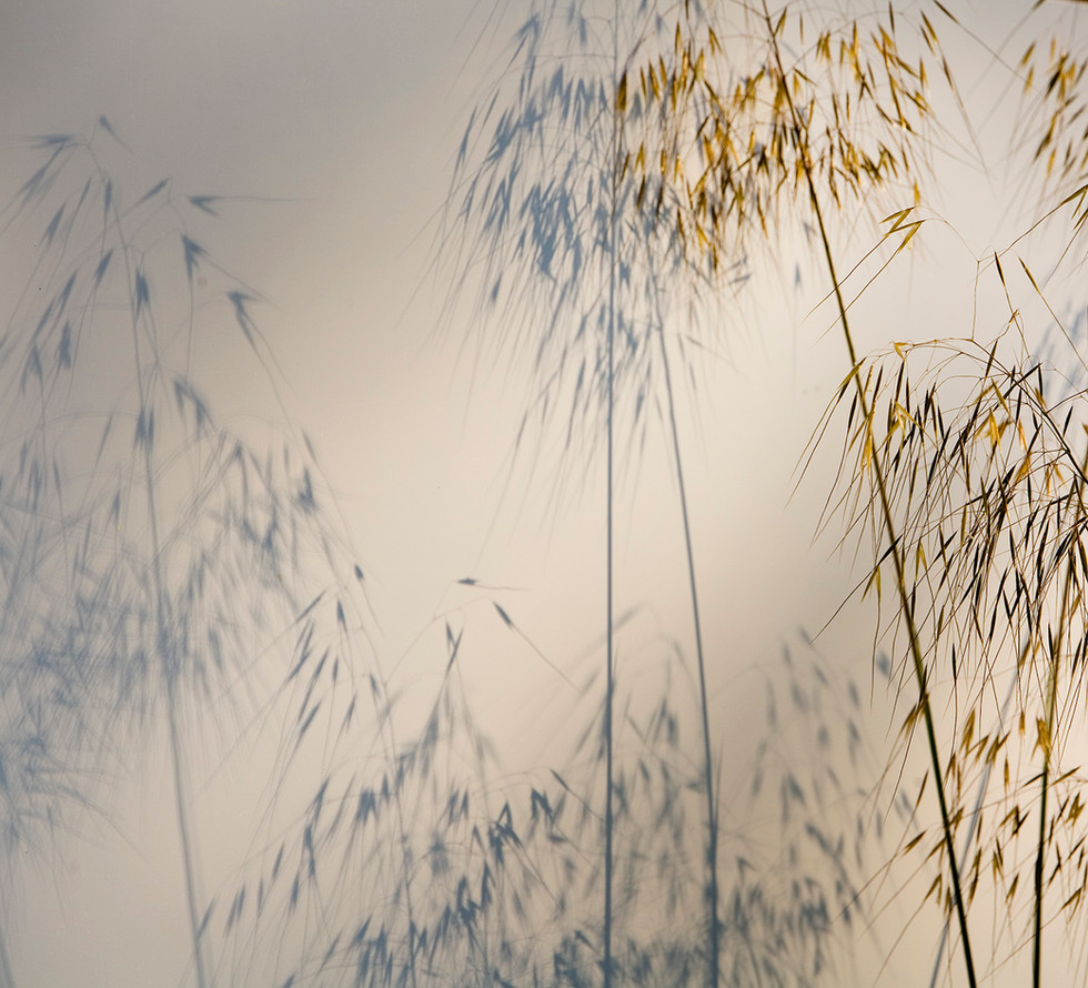Shadows and grasses
