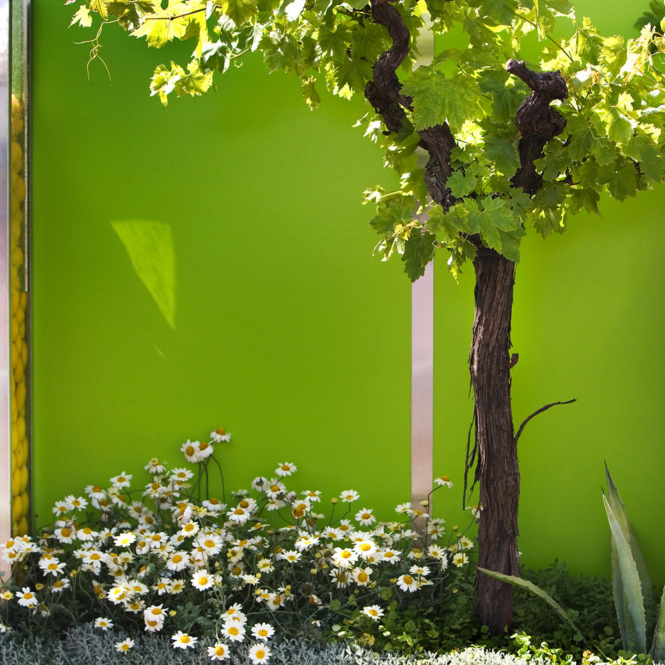 Rory McVean Garden lemons and vines
