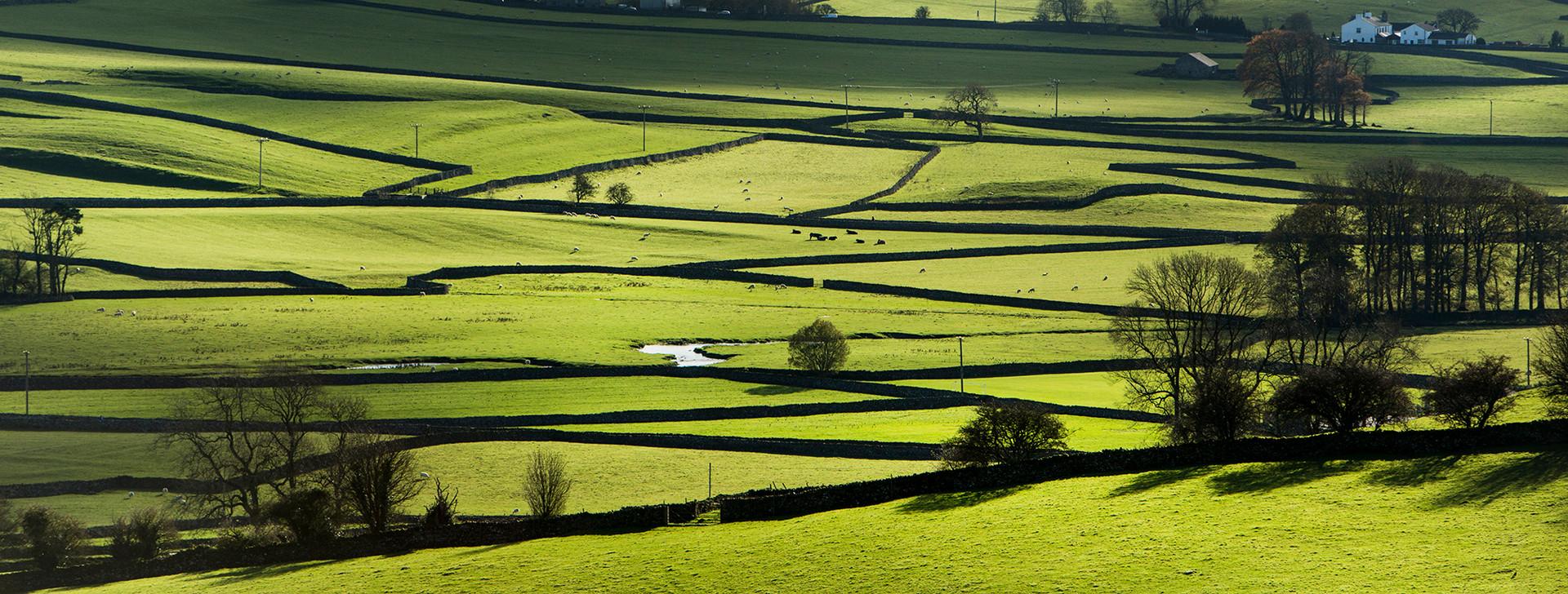 Sunlit Dales Landscape
