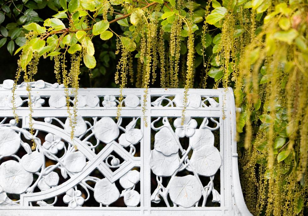 Bench and amaranthus