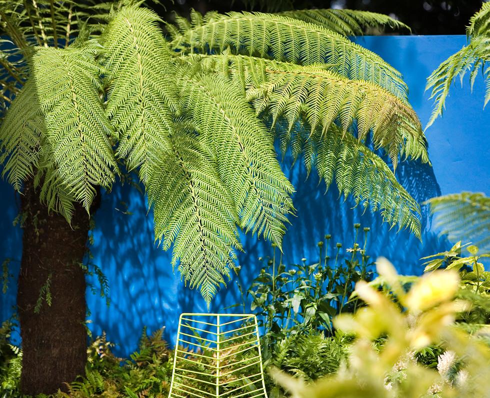 Forest Fusion Garden, 2007 RHS Flower Show Tatton Park