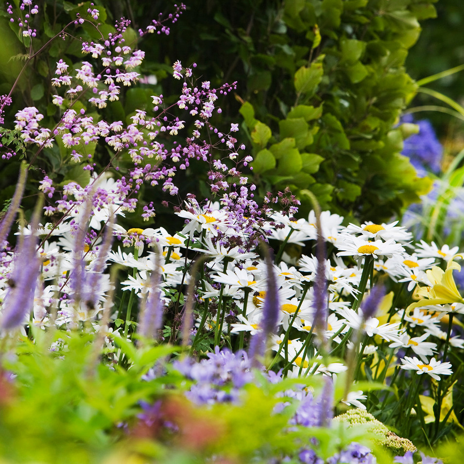 Country garden flowers