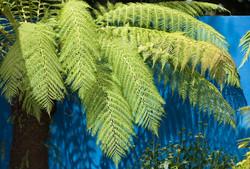 Forest Fusion Garden
