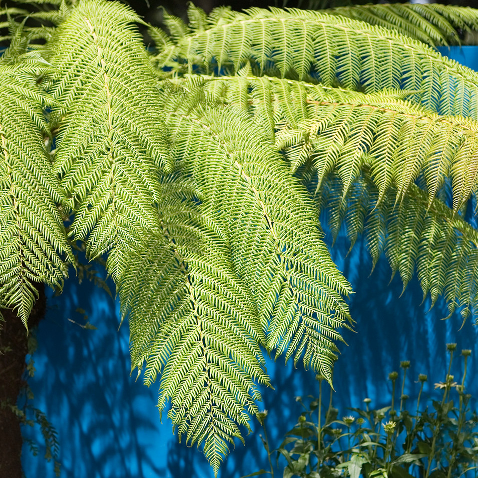 Forest Fusion Garden at Tatton Park