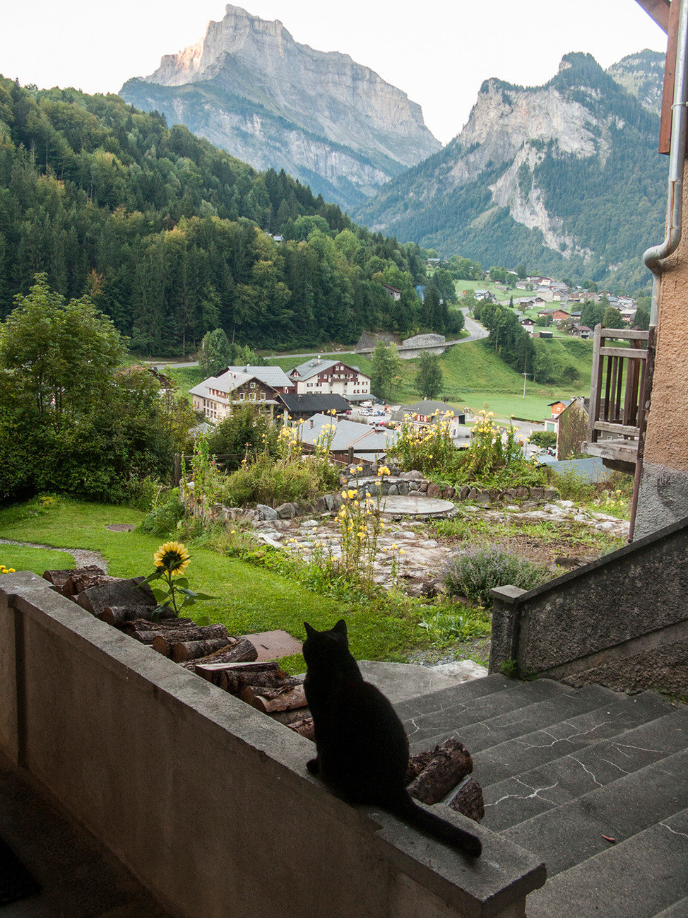 Black cat, Sixt Fer a Cheval French Alps