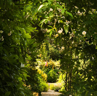 Clearbeck pathways