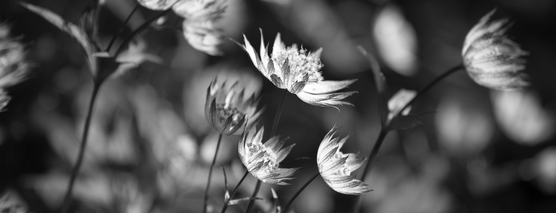 Black and white flowers print