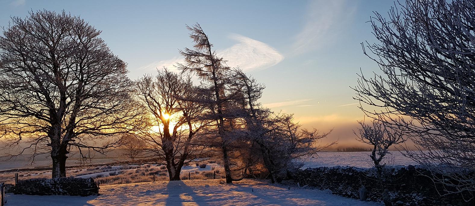 Snowy garden at dawn