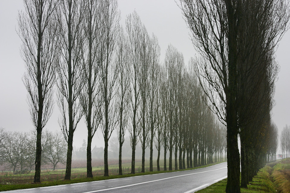 French Road in the rain