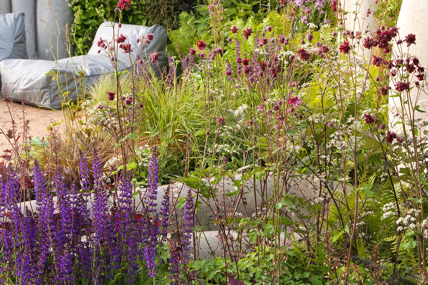 Salvia and Aquilegia Vulgaris