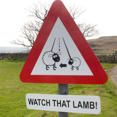Lambs on the Road!