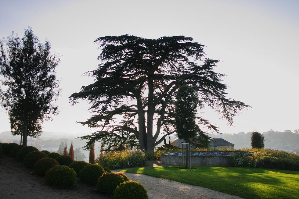 Garden, Chateau Royal d'Amboise