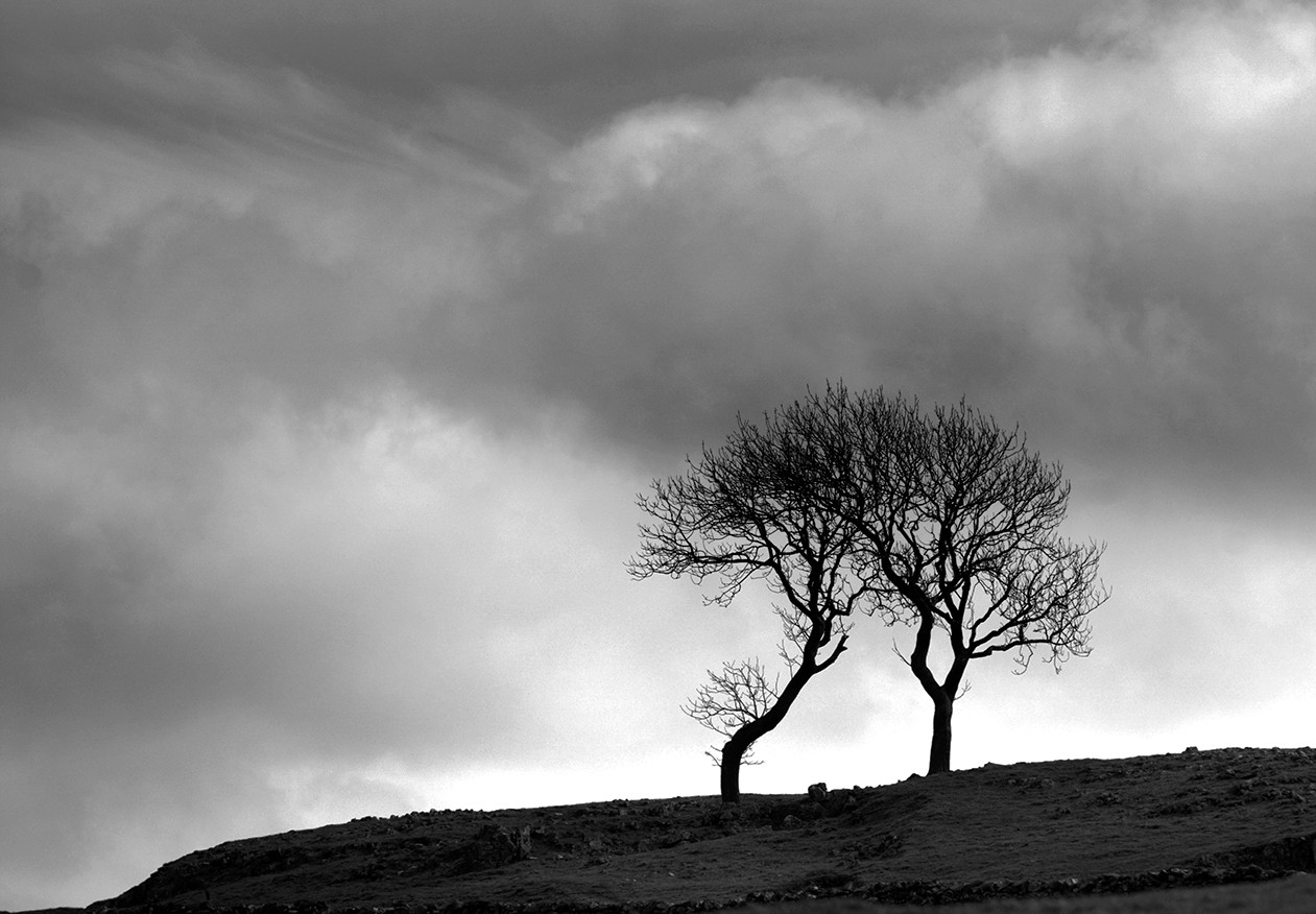 Twin Trees, Yorkshire Dales