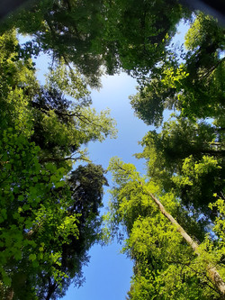 Waldträumen