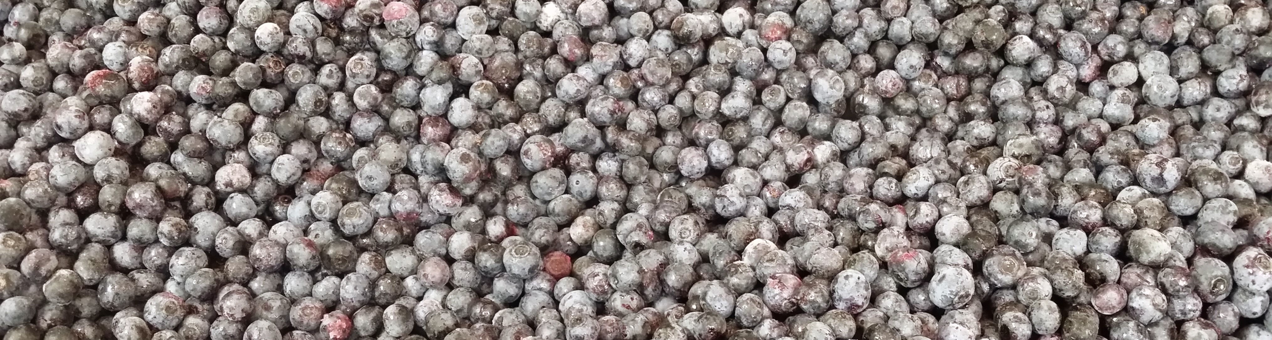 Blueberry Hill U-Pick