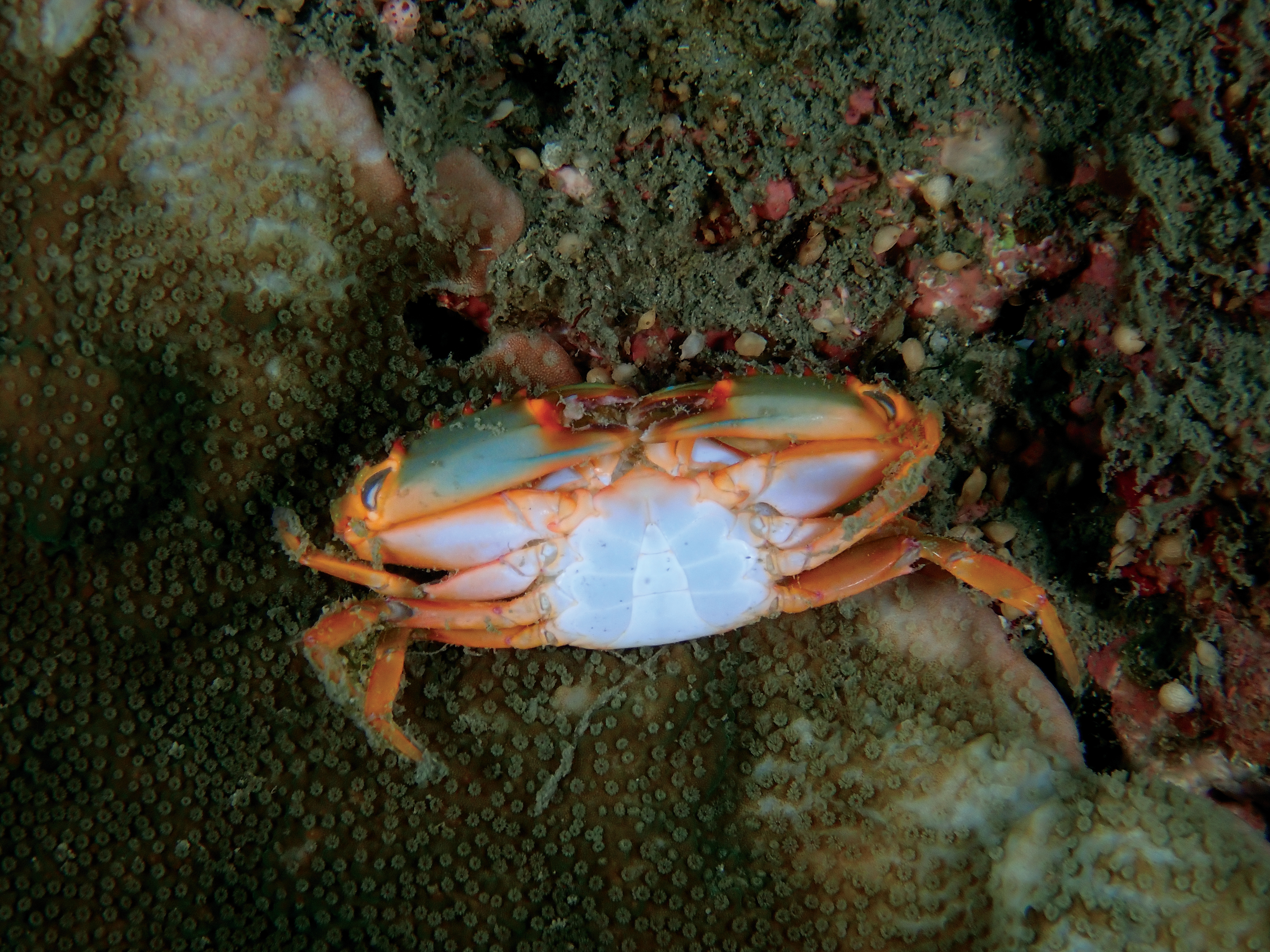 Philip Wong - 西吉城堡 - 蟹