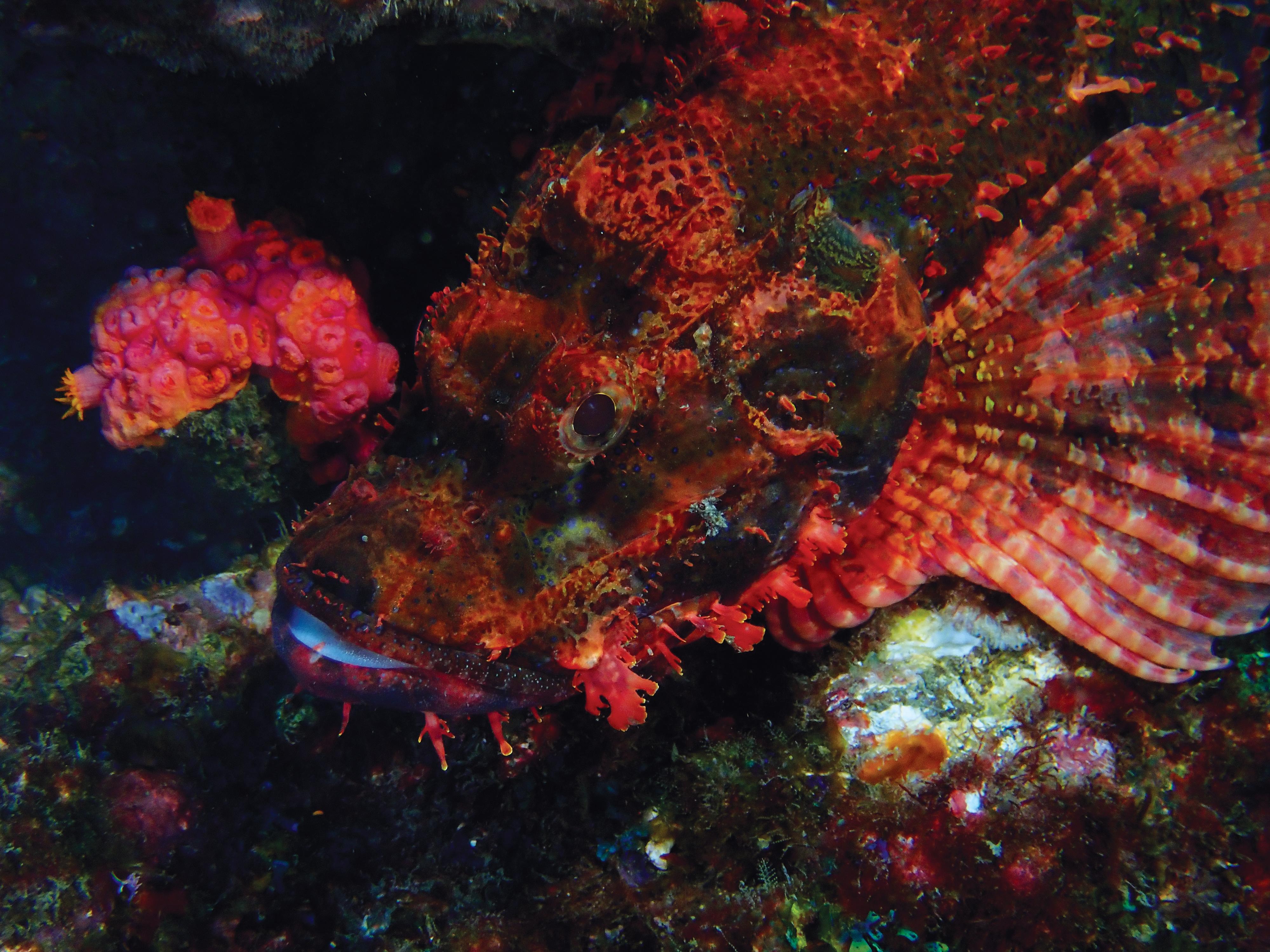 Philip Wong - 東西吉廊道 - 蠍子魚